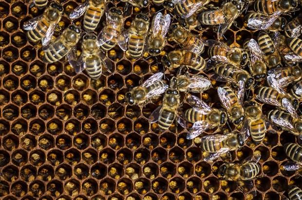 Bee_Edit_02