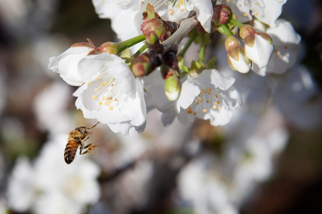 Bee_Edit_11