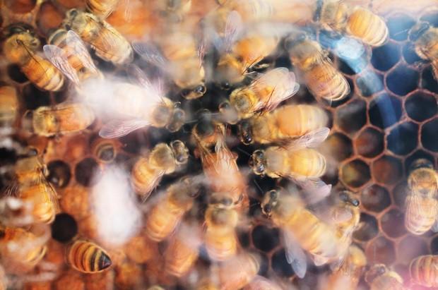 Bee_Edit_18