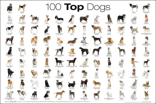 dog-breed-poster